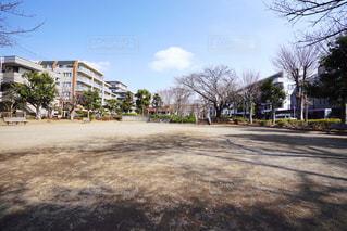 午前中の公園の写真・画像素材[1025016]