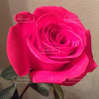 花の写真・画像素材[539313]
