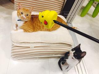 猫の写真・画像素材[539916]