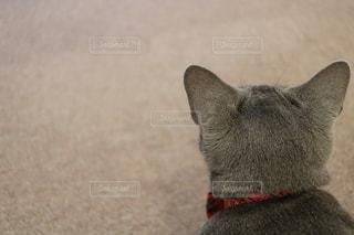 猫 - No.547657