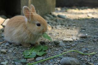 動物の写真・画像素材[559520]