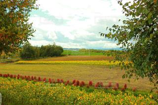 フィールド内の黄色の花 - No.761759