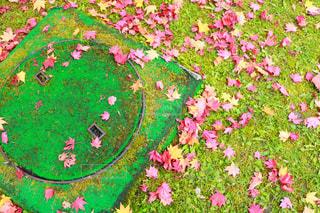 近くのフラワー ガーデン - No.821667