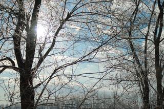 森の大きな木 - No.1018420