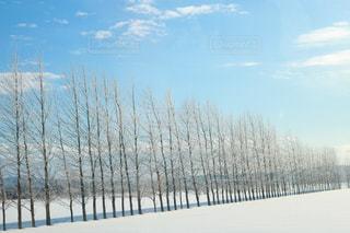 雪の木 - No.1018421