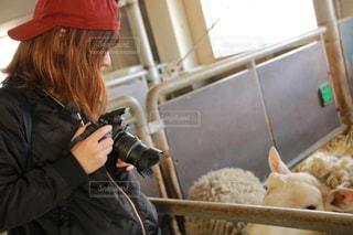 カメラ女子と羊 - No.1156271