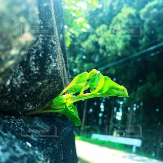 自然の写真・画像素材[539763]