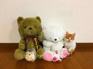 猫の写真・画像素材[557861]