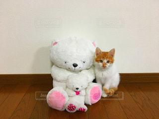 猫の写真・画像素材[557862]