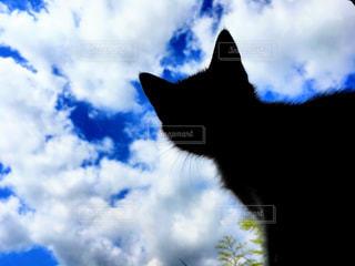 猫の写真・画像素材[557865]