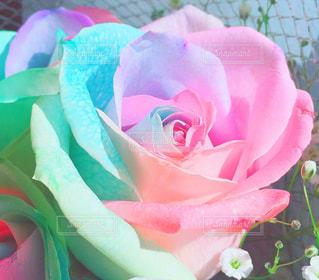 近くにピンクの花のアップの写真・画像素材[1029113]