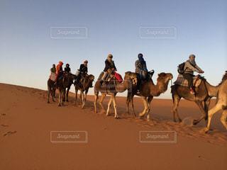 ラクダに乗ってサハラ砂漠の写真・画像素材[1290348]