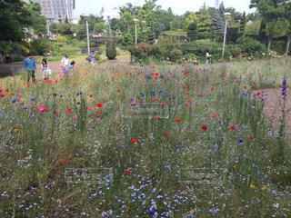 花の写真・画像素材[540120]