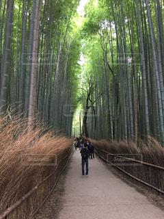 京都の写真・画像素材[540867]