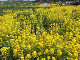 春の写真・画像素材[540871]