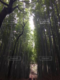 森林 - No.540899