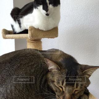 猫カフェの写真・画像素材[751494]