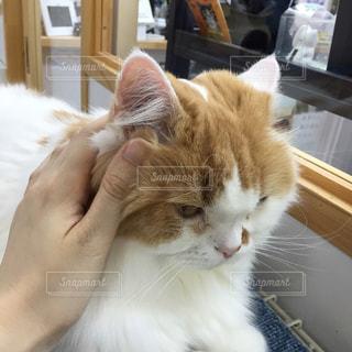 猫カフェの写真・画像素材[751497]