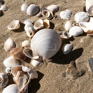 貝殻の写真・画像素材[791122]