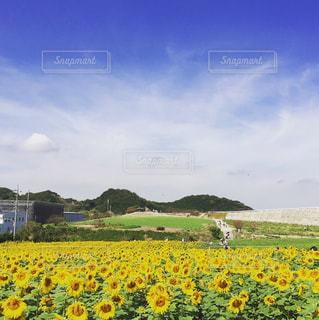 観光農園花ひろば - No.797003