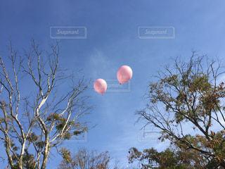 風船の写真・画像素材[968376]