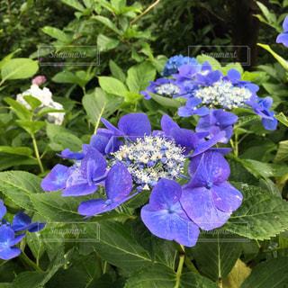 花の写真・画像素材[680700]