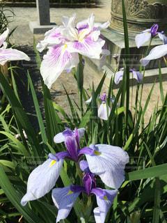 花の写真・画像素材[555429]