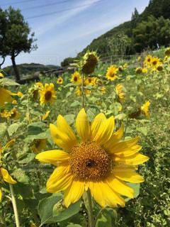 夏の写真・画像素材[569632]