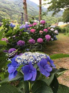 花の写真・画像素材[569927]