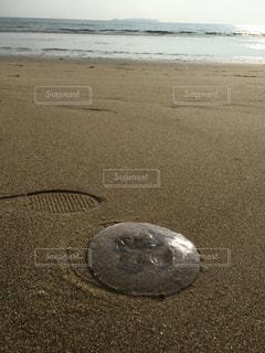 海の写真・画像素材[606960]