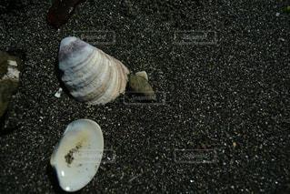 海の写真・画像素材[541084]