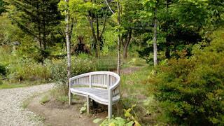 庭 憩いのひと時の写真・画像素材[541287]