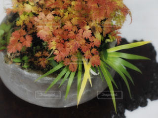 盆栽の写真・画像素材[541969]