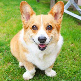 犬の写真・画像素材[549098]