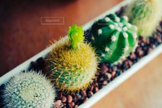 植物の写真・画像素材[541862]