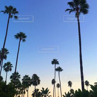 空の写真・画像素材[542149]