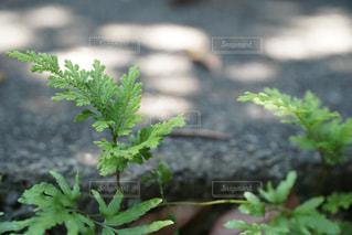 野草の写真・画像素材[554001]