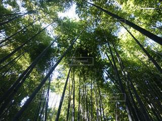 近くの木のアップの写真・画像素材[1077567]