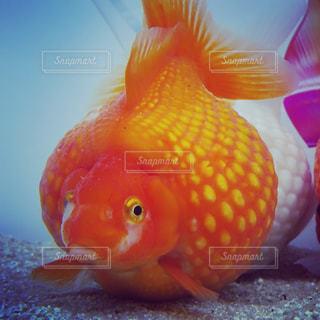 魚 - No.542575