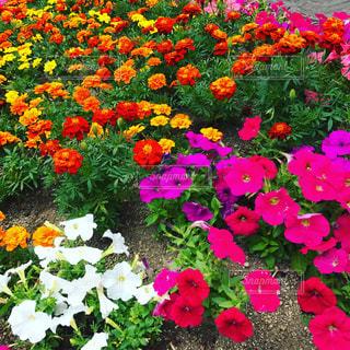 花の写真・画像素材[543733]
