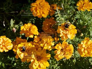 黄色い花の上に座っての花で一杯の花瓶の写真・画像素材[757001]
