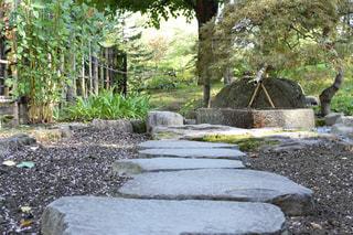 日本庭園の写真・画像素材[794436]