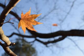 秋の終わりの写真・画像素材[832711]
