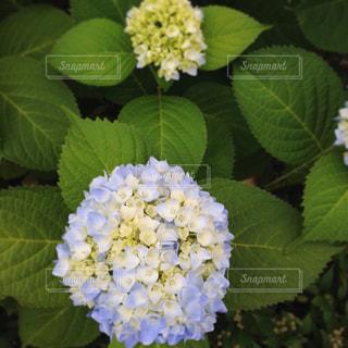 花の写真・画像素材[619180]