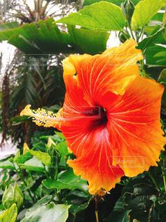 花の写真・画像素材[543014]