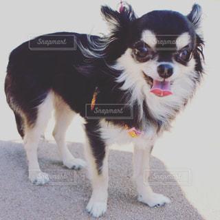 犬 - No.546194