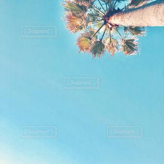 木のクローズアップの写真・画像素材[2091764]