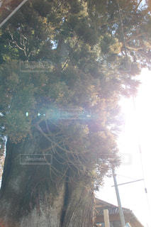 近くの木のアップの写真・画像素材[1749952]