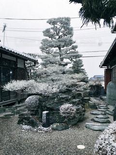冬の写真・画像素材[543554]