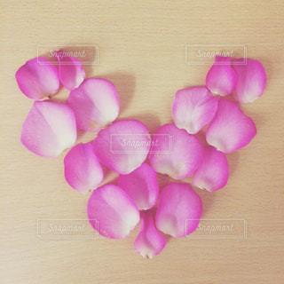 花の写真・画像素材[545361]
